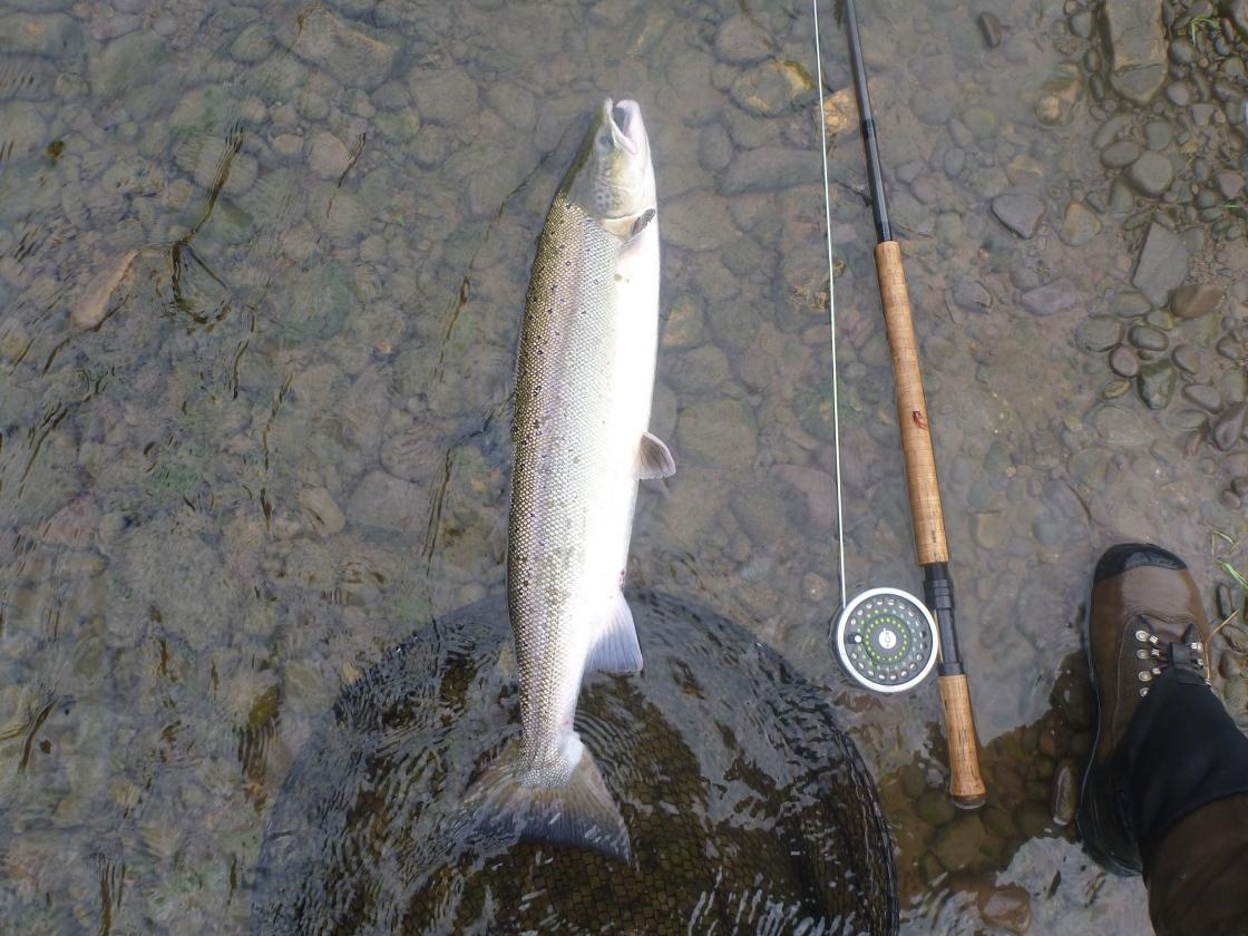 2015-salmon-2